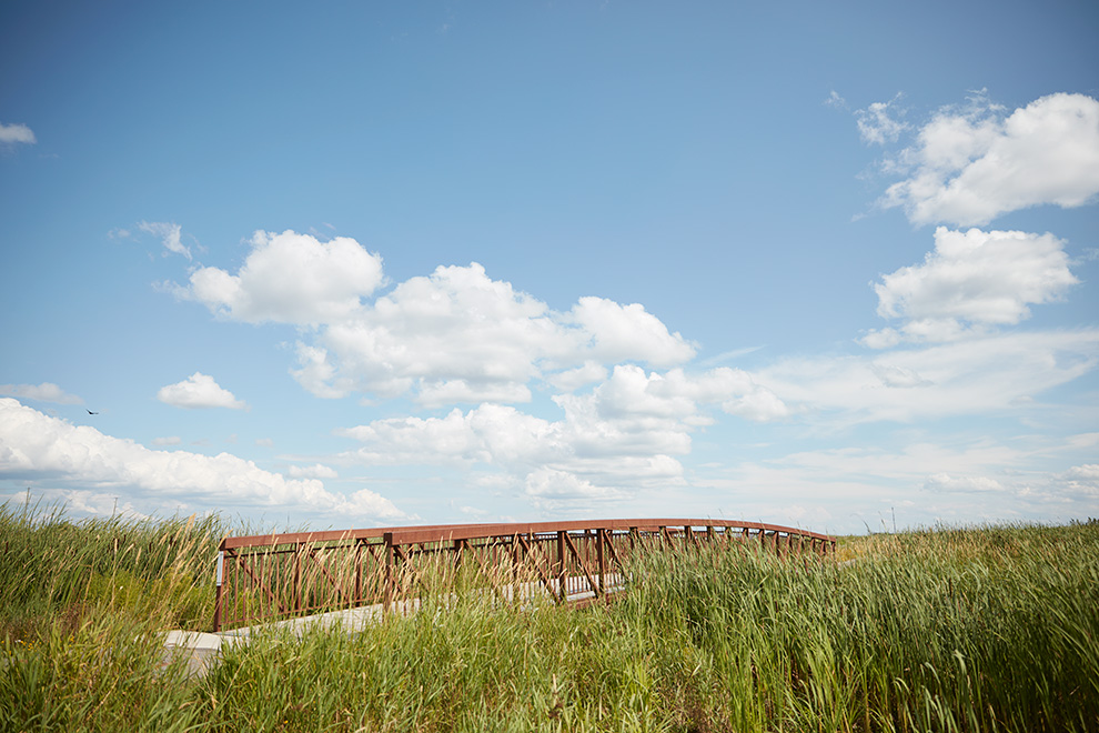 Bridge surrounded by tall grass. Carp River in Ottawa.