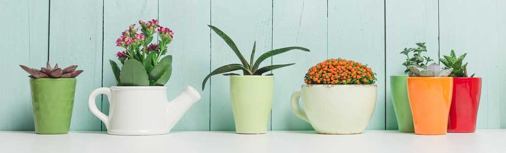 Plants That Clean The Air In Your Home Blog Live Better By Minto