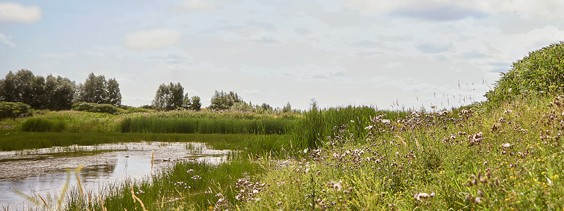 Avalon Vista - Pond In Community